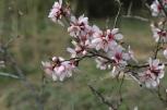 flower-3258961_640