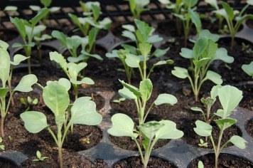 seedling-1386653__340