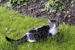 cat-2539225_640