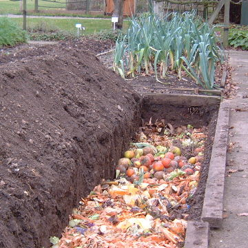 compost-trench
