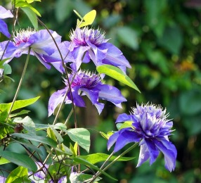 flower-3394263_640