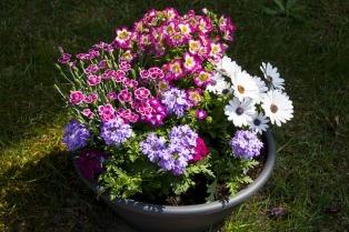 flower-3397964_640