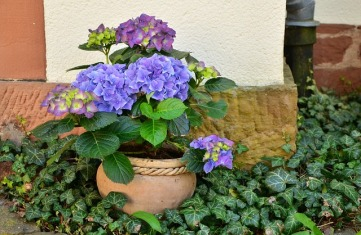 flowerpot-1345371_640