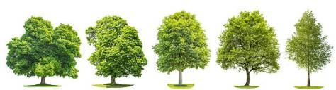 trees_royaltyfree