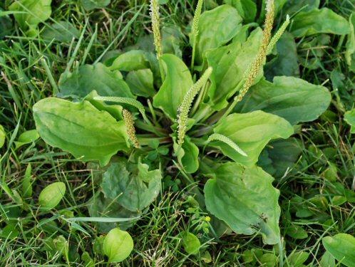 Soil   The Peterborough & Area Master Gardeners