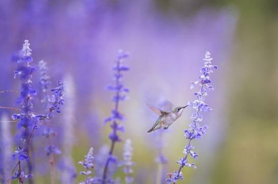 hummingbird 1851489_640