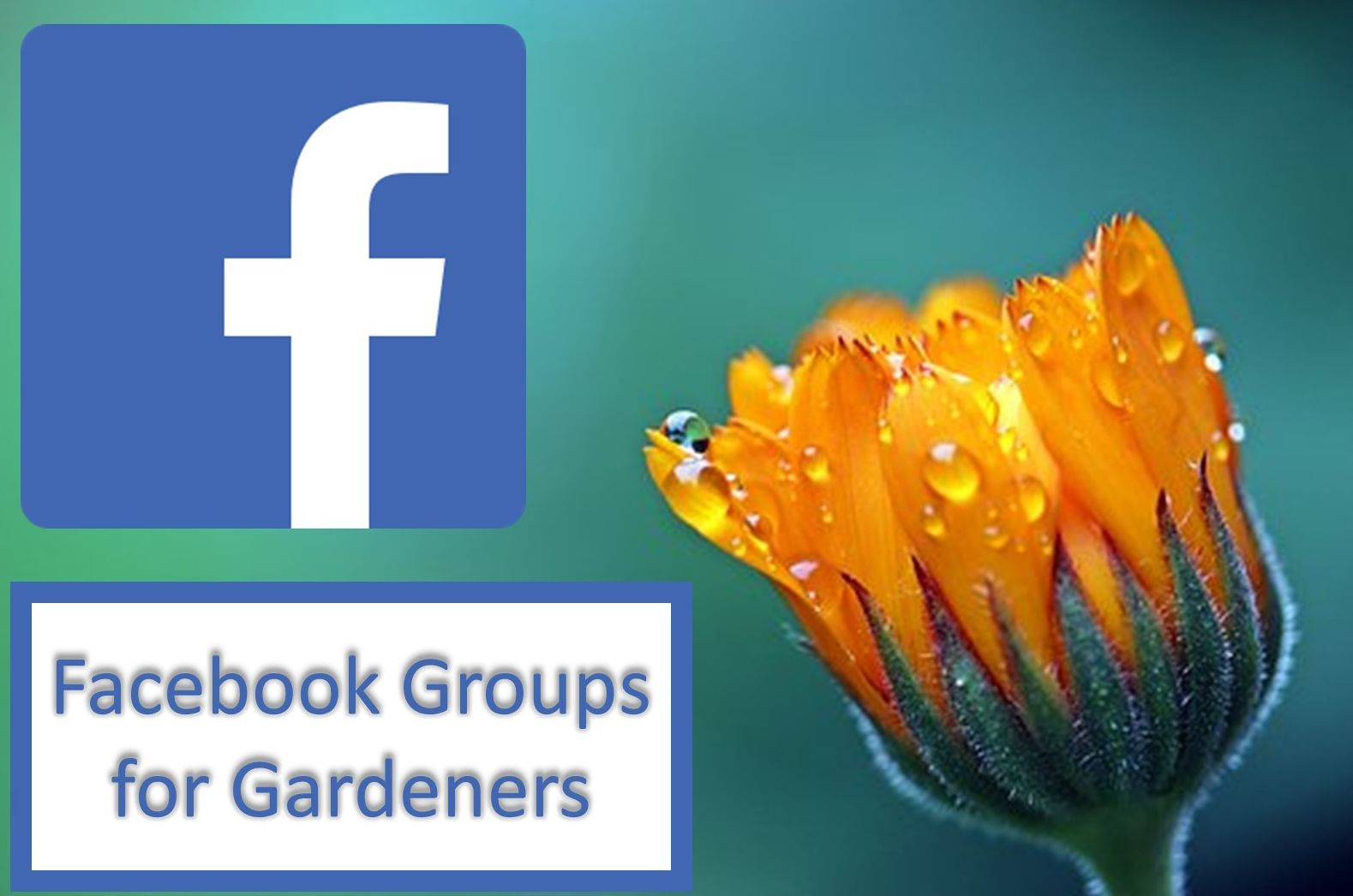 fb groups blog