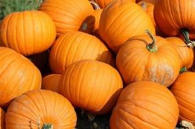 pumpkins-457716_640