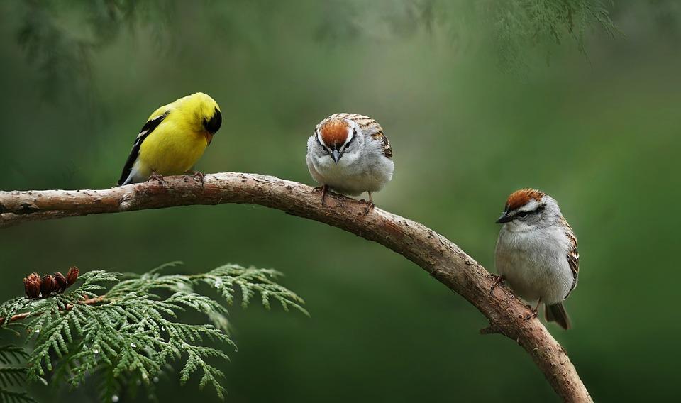 asparrow-3537687_960_720 (3)