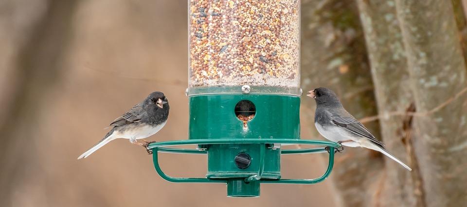bird-feeder-4032907_960_720