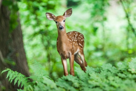 wildlife-1367217_960_720