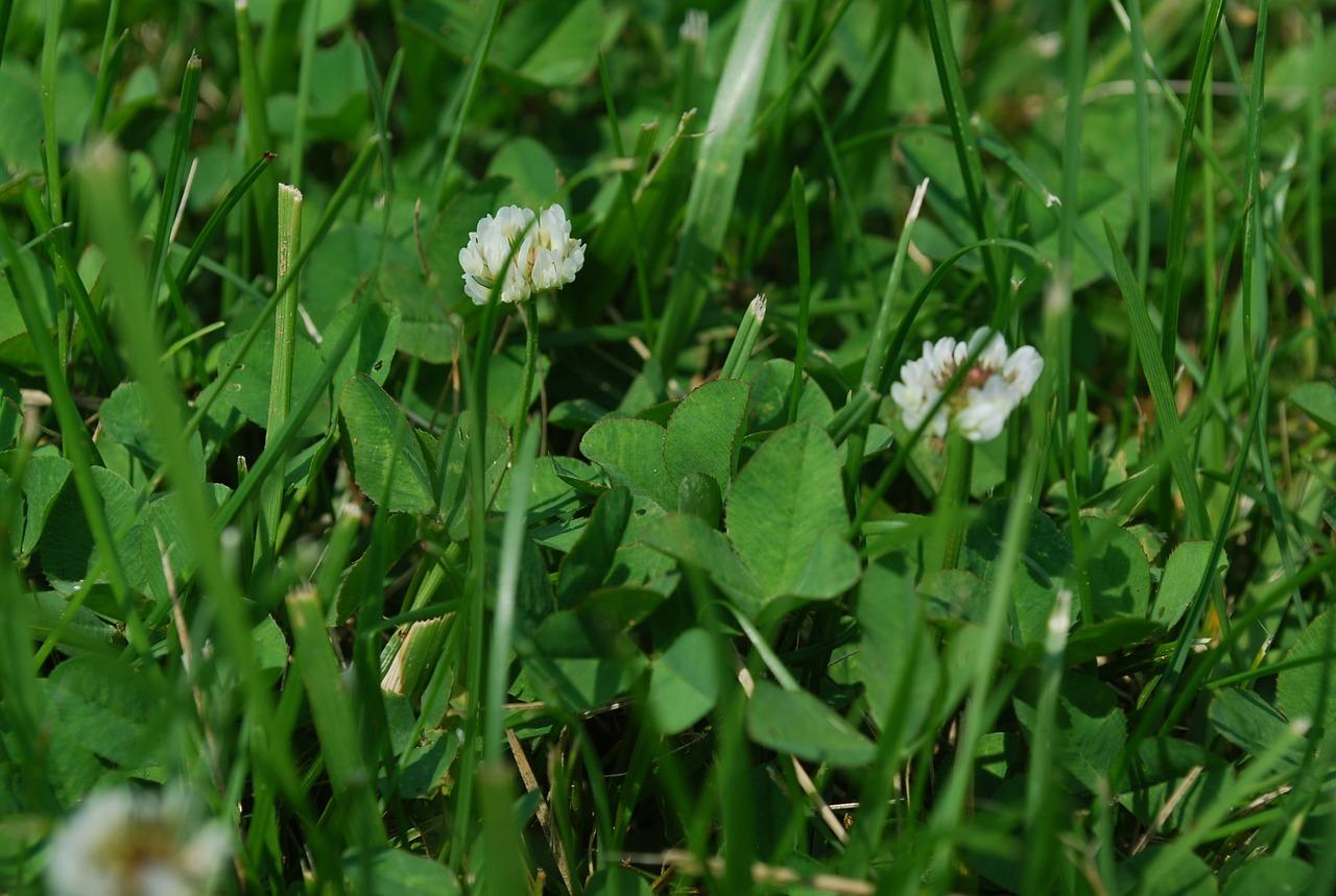 grass-15571_1280
