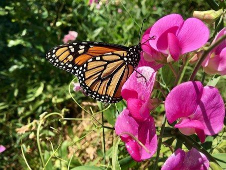 butterfly-2537098__340