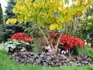 thumbnail_Witchhazel garden_3341-0